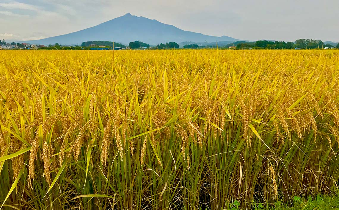 日本には美しい四季があります。青春、朱夏、白秋、玄冬