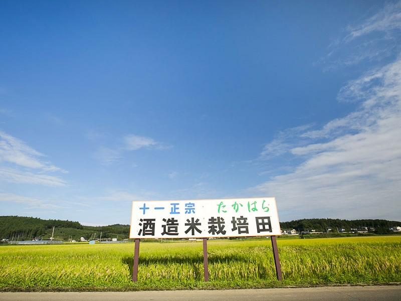森戸酒造 酒造米栽培田