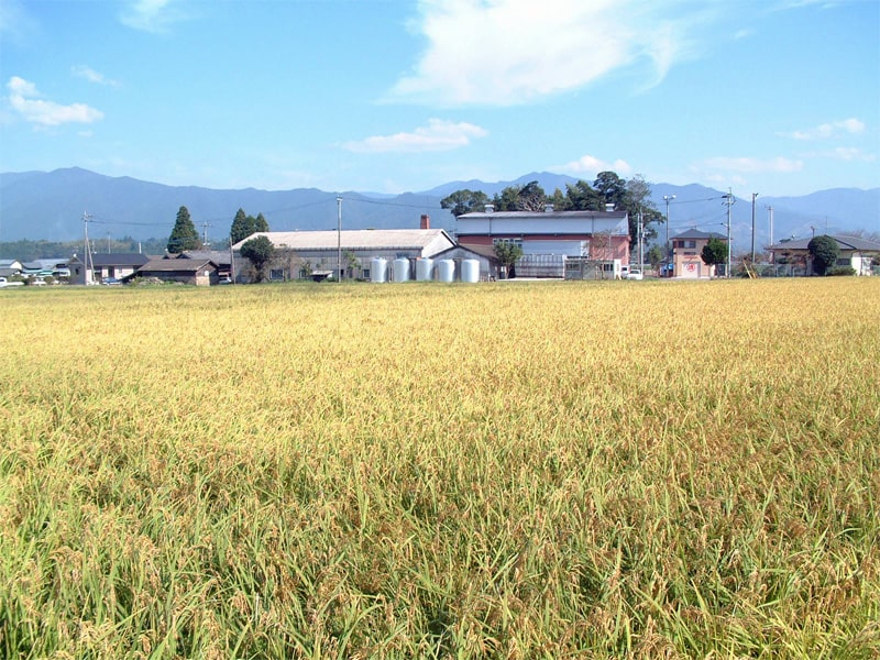 恒松酒造 ひのひかり収穫前 蔵外観