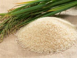 佐々木酒造 原料米