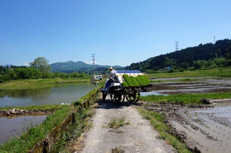 金升酒造 田植え風景