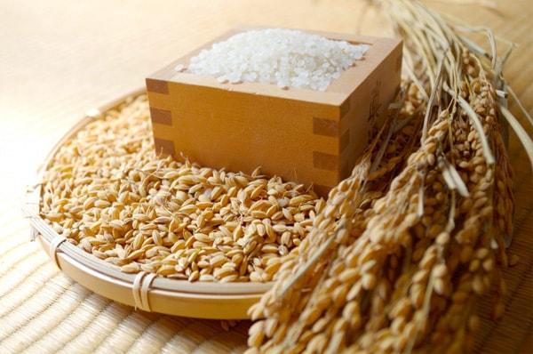 精米、稲、籾